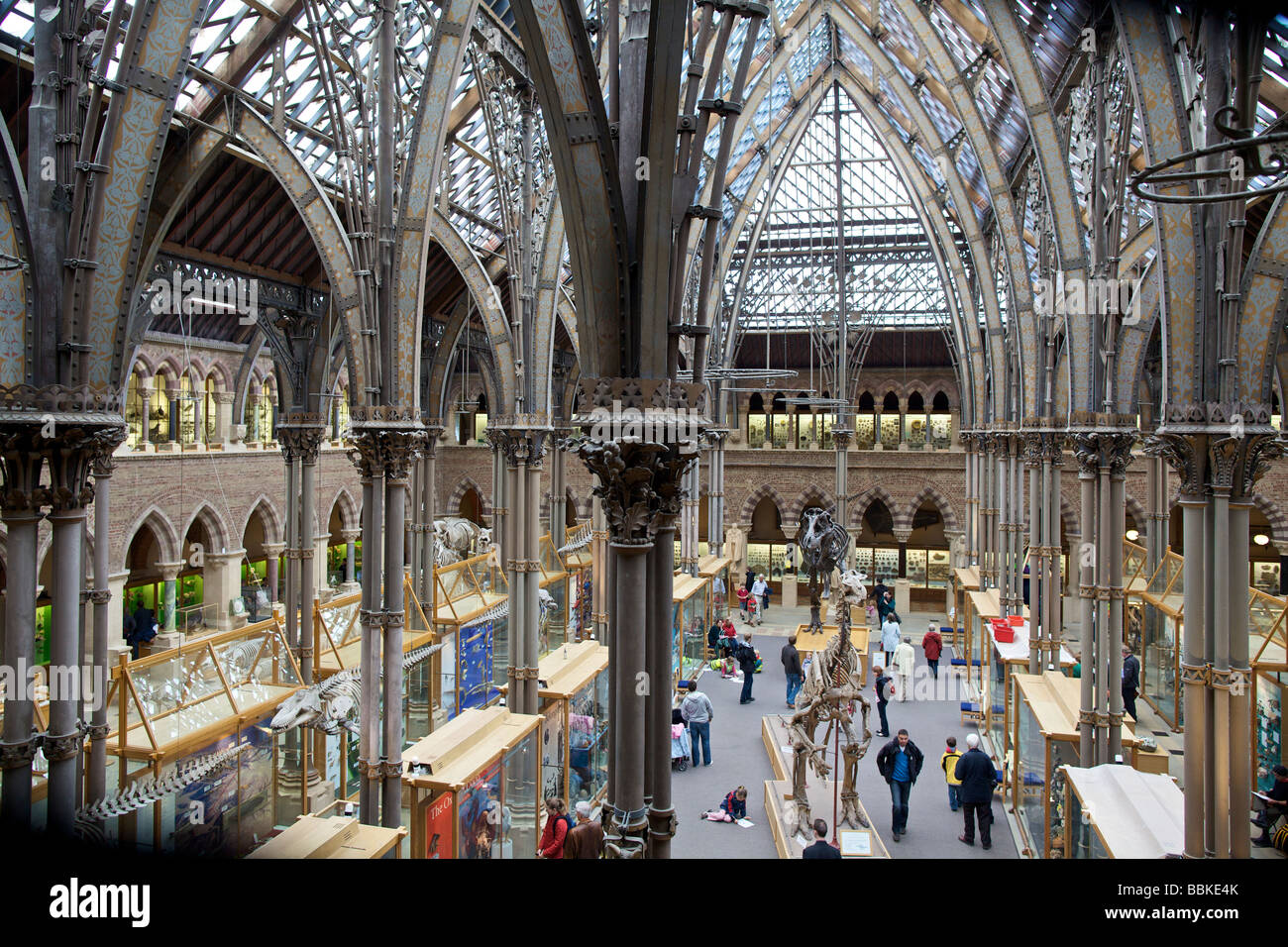 Oxford University Museum of Natural History England - Stock Image