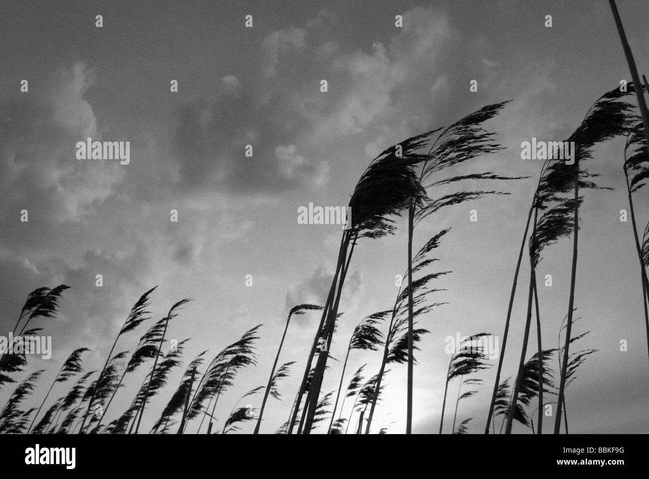BEACH GRASS - Stock Image