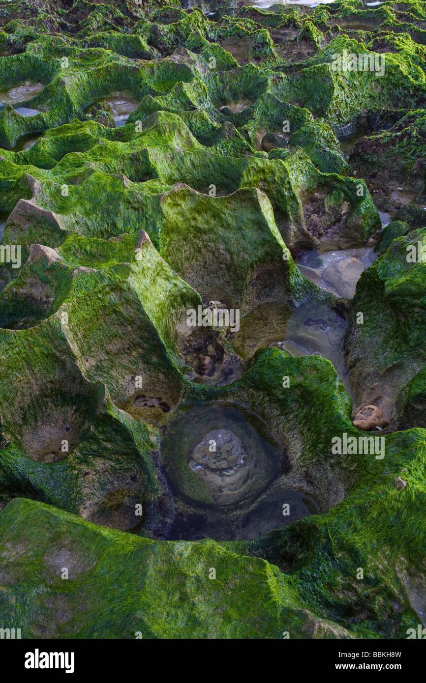 Green seaweed covered jagged coastal rocks - Stock Image