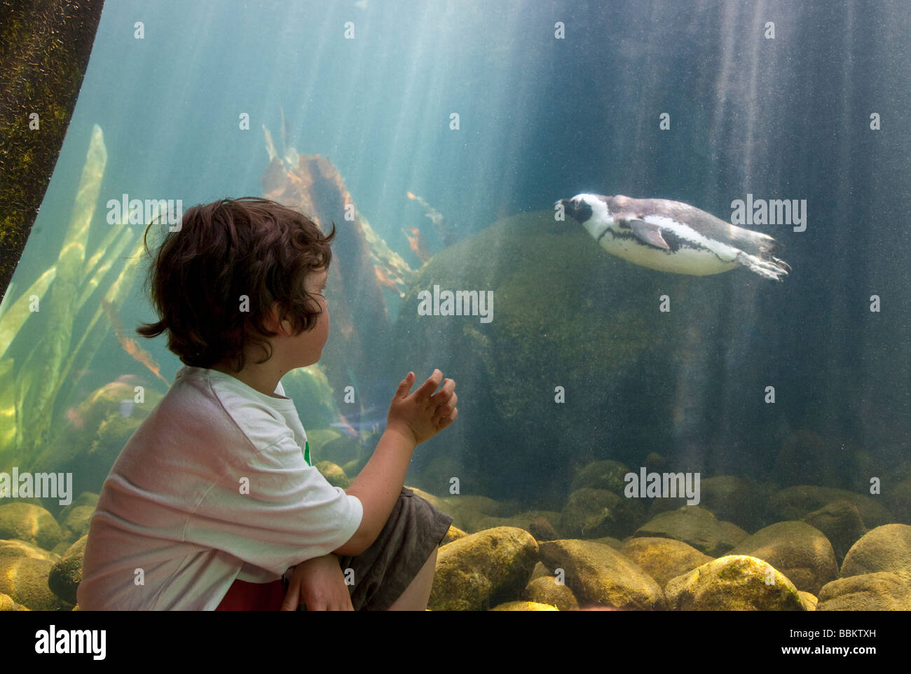 Little boy looking at penguins in aquarium at zoo with sunlight. - Stock Image