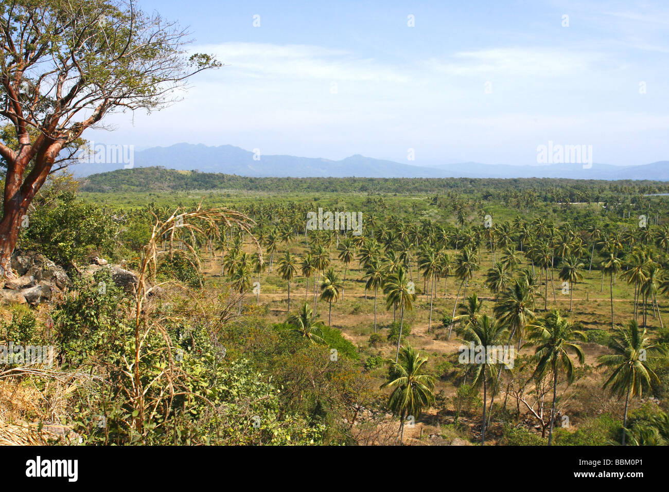 Palm forest and distant mountains San Blas Nayarit Mexico - Stock Image