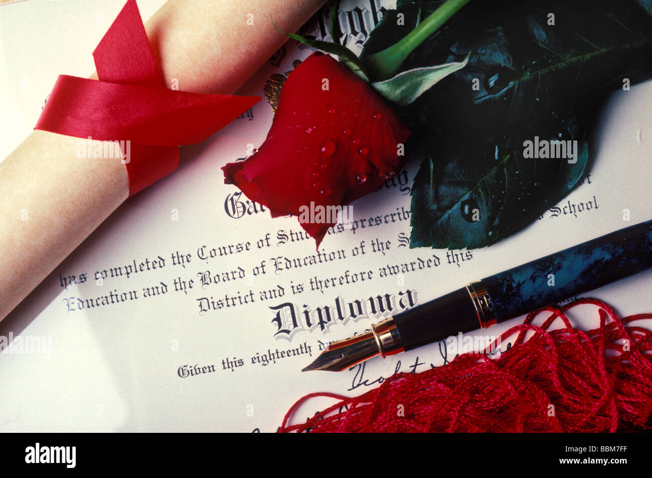 Diploma and red rose with fountain pen - Stock Image
