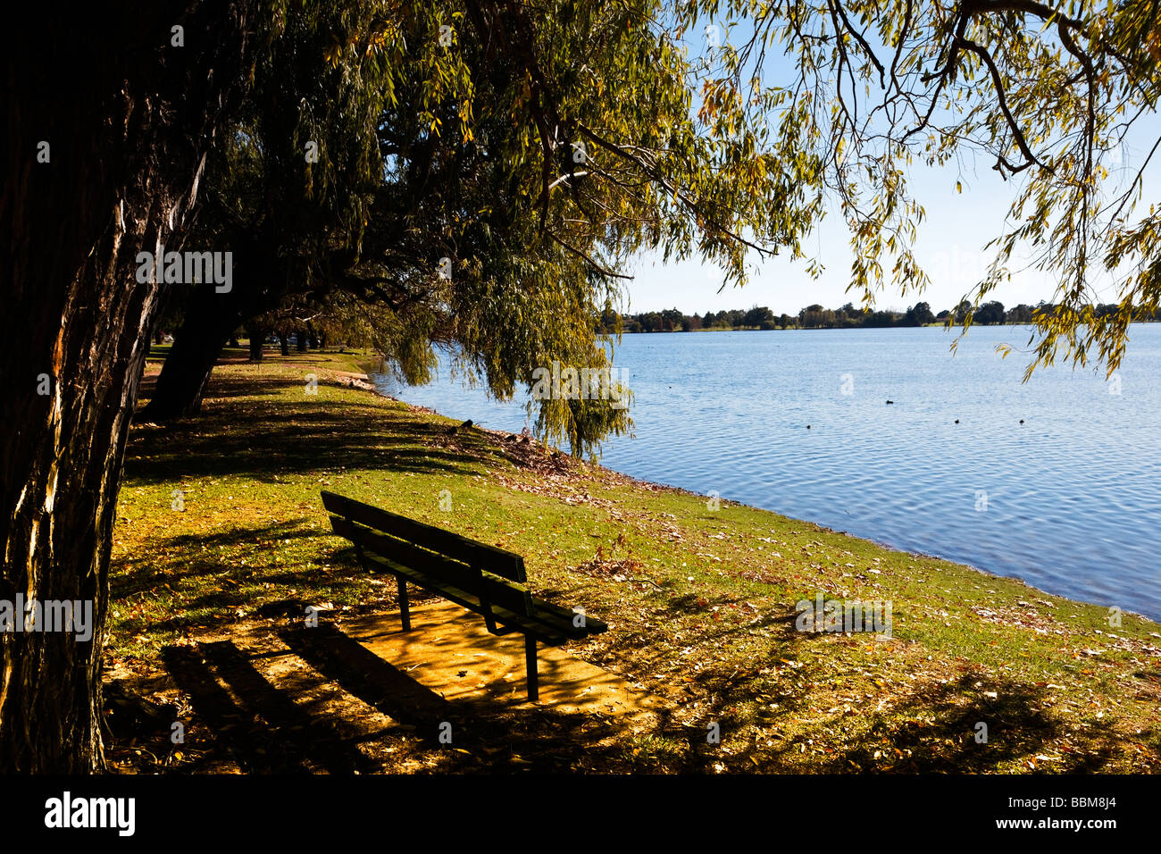 Trees By Lake on Autumn Day Gentle Lighting Seat Ducks Nearby - Stock Image