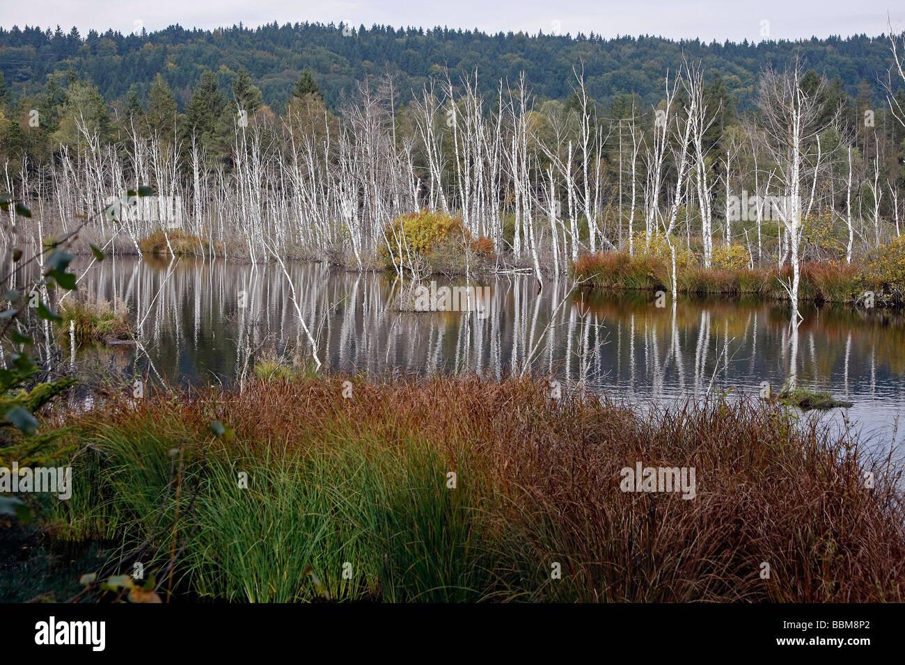 Renatured, newly wettened moor, Eglinger Filz, Bavaria, Germany Stock Photo