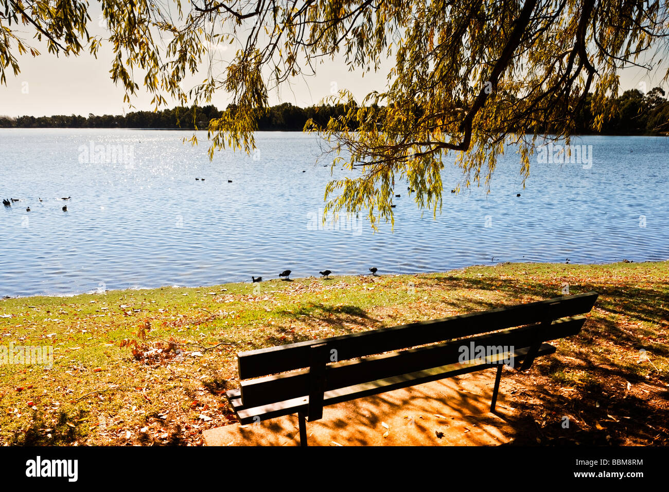Trees By Lake on Autumn Day Gentle Lighting Seat - Stock Image