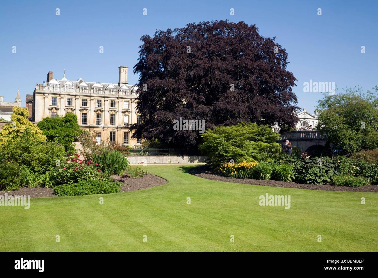 The Fellows Garden, Clare College, Cambridge University, UK - Stock Image