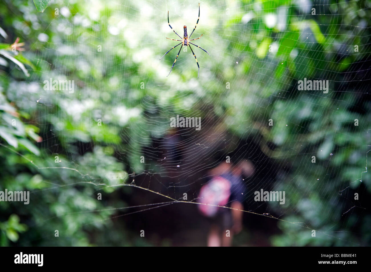 China, Hong Kong, Lantua Island. Walking the Lantua Trail is surprisingly rich in natural variety of Spiders - Stock Image