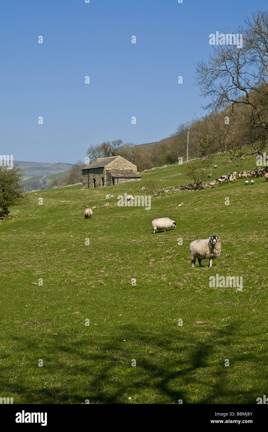 Dh WHARFEDALE NORTH YORKSHIRE Sheep Field And Stone Barn Yorkshire Dales National Park Animal Farming Uk