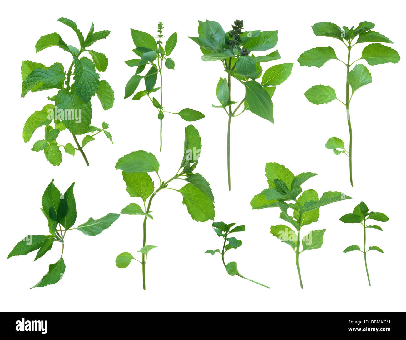 View of stems with green leaves - Stock Image
