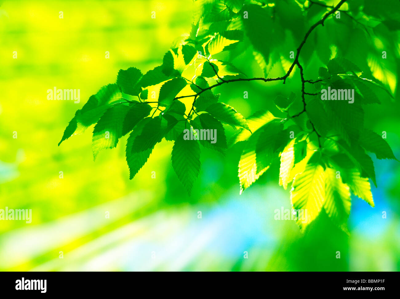 Close-up of leaves with lush greenness (digital composite) - Stock Image