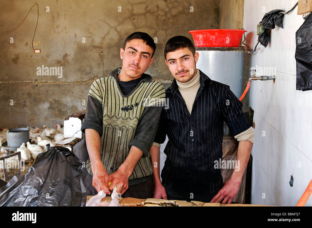Poultry traders in Aleppo, Syria, Asia Stock Photo