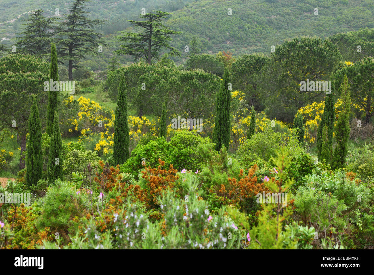 Mediterranean forest near Fontfroide Languedoc-Roussillon France - Stock Image