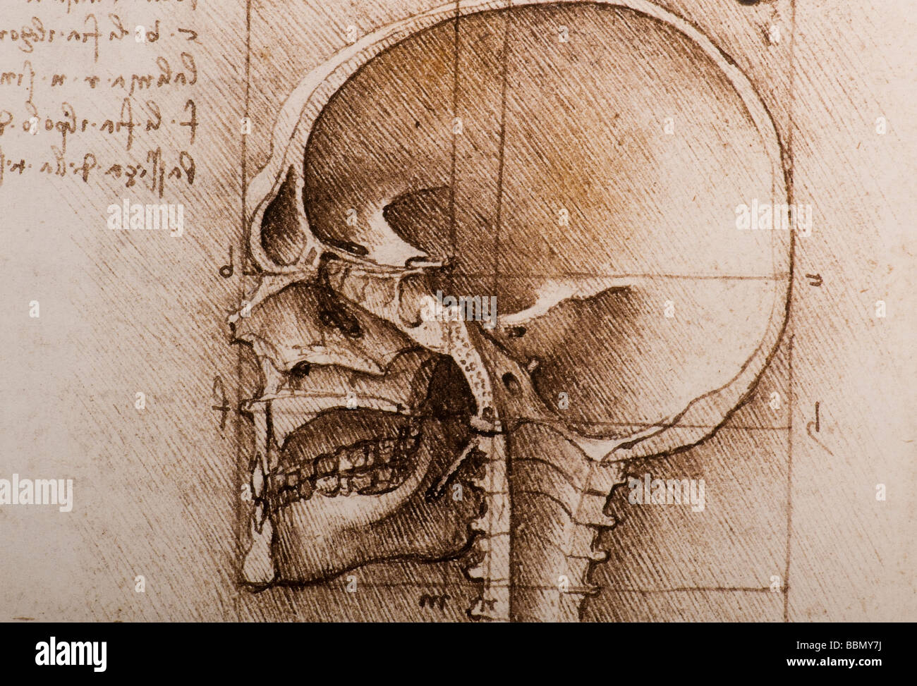 detail Anatomical studies of the human skull by Leonardo da Vinci ...