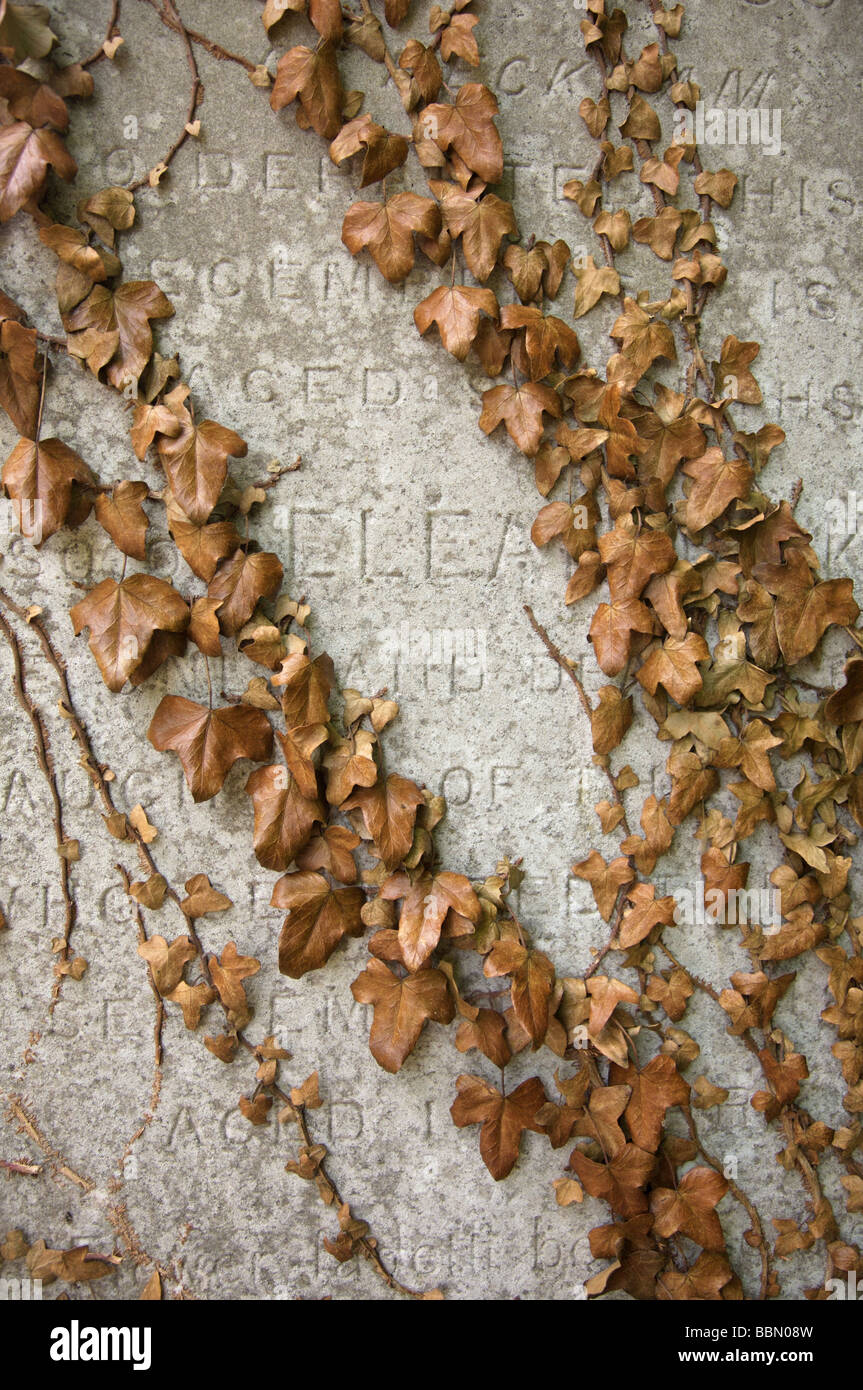 Grave stone with vine leaves at Nunhead Cemetary, London - Stock Image