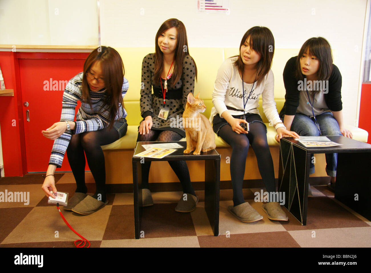 Japanese Women At A Cat Cafe In Tokyo Japan Stock Photo Alamy