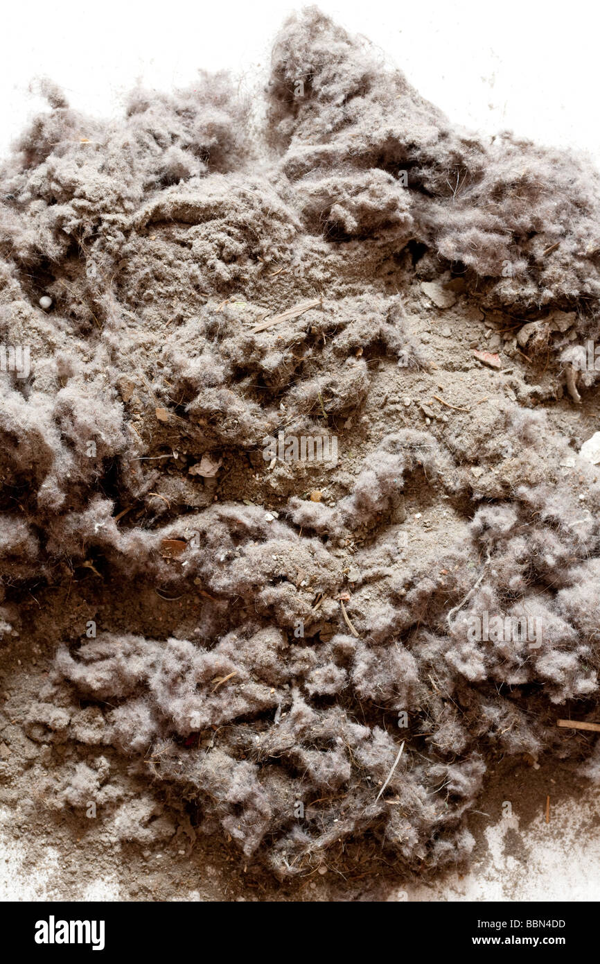 House dust from vacuum cleaner bag - Stock Image