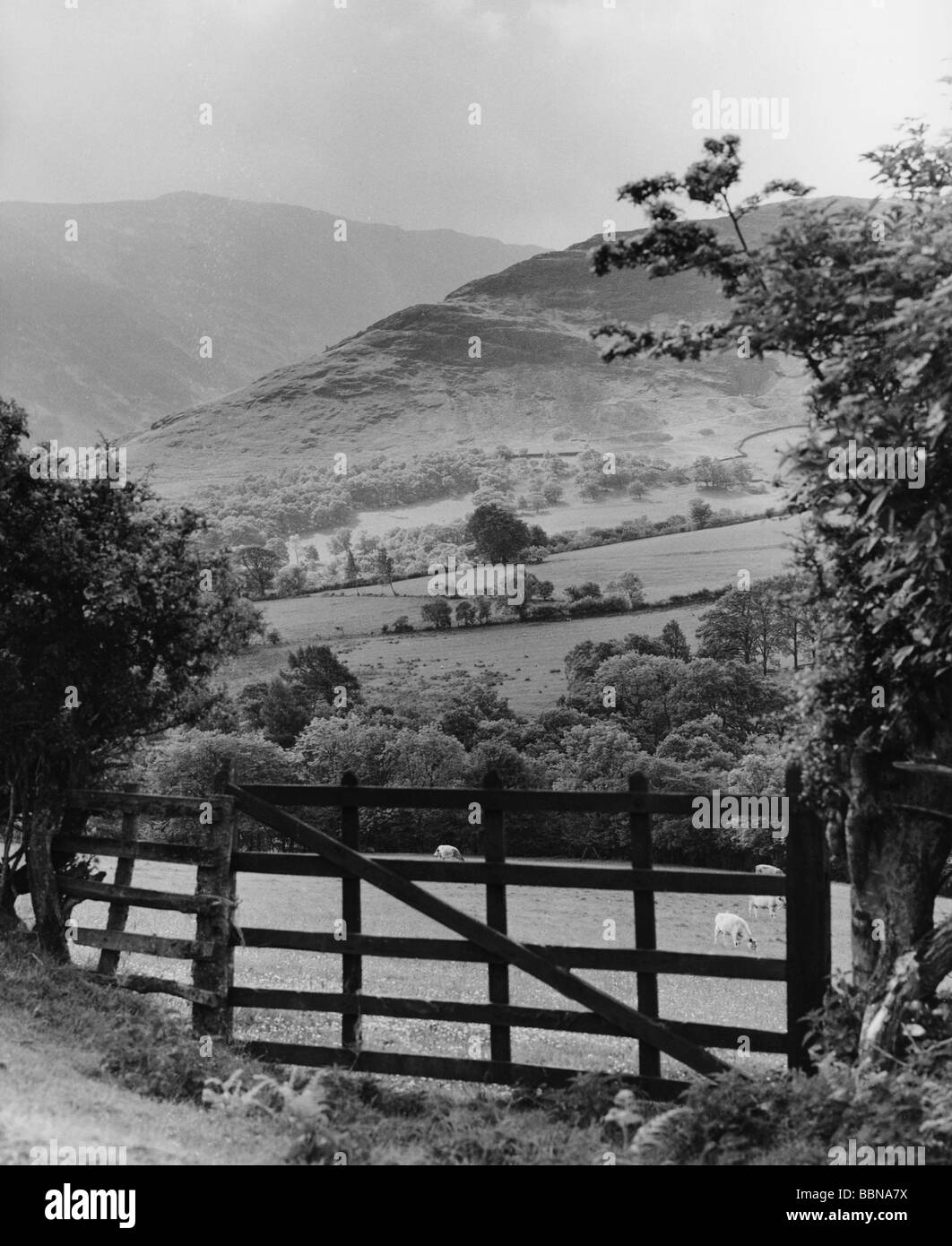geography / travel, Great Britain, England, landscapes, pastureland near Keswick, 1960s, Additional-Rights-Clearances - Stock Image