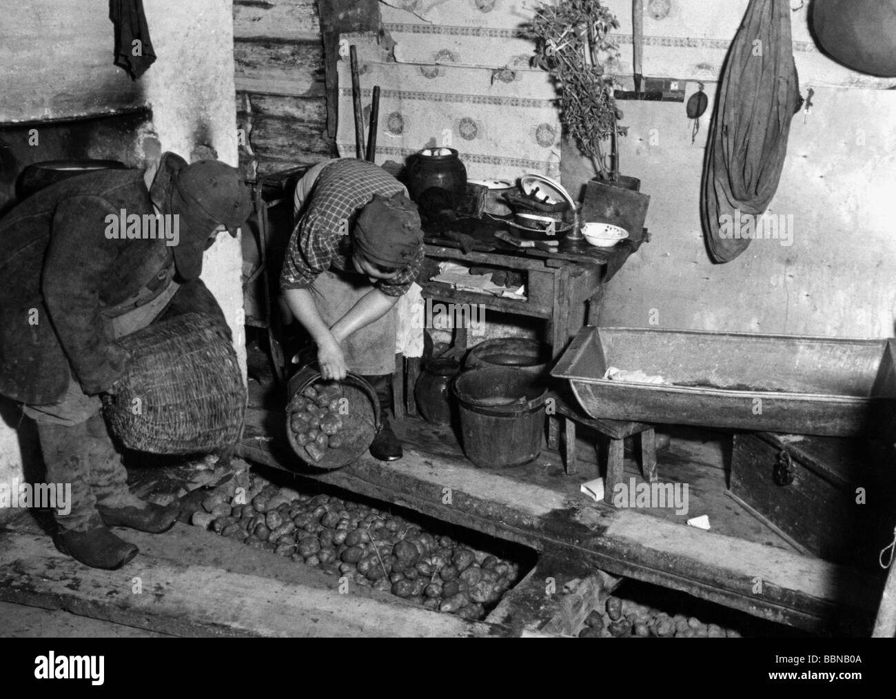 geography / travel, Russia, people, Russian farmers storing potatoes under the planks of their house, Sytshevka - Stock Image