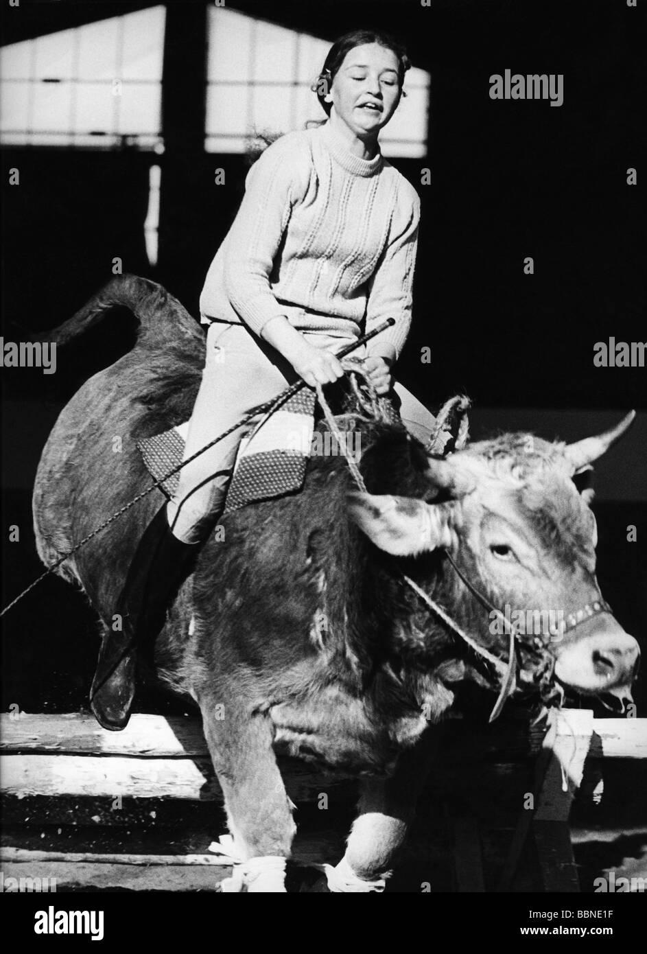 oddity, woman riding on bull, cow, cows, bulls, women, people, curiosity, curiosities, oddities, 20th century, historic, - Stock Image