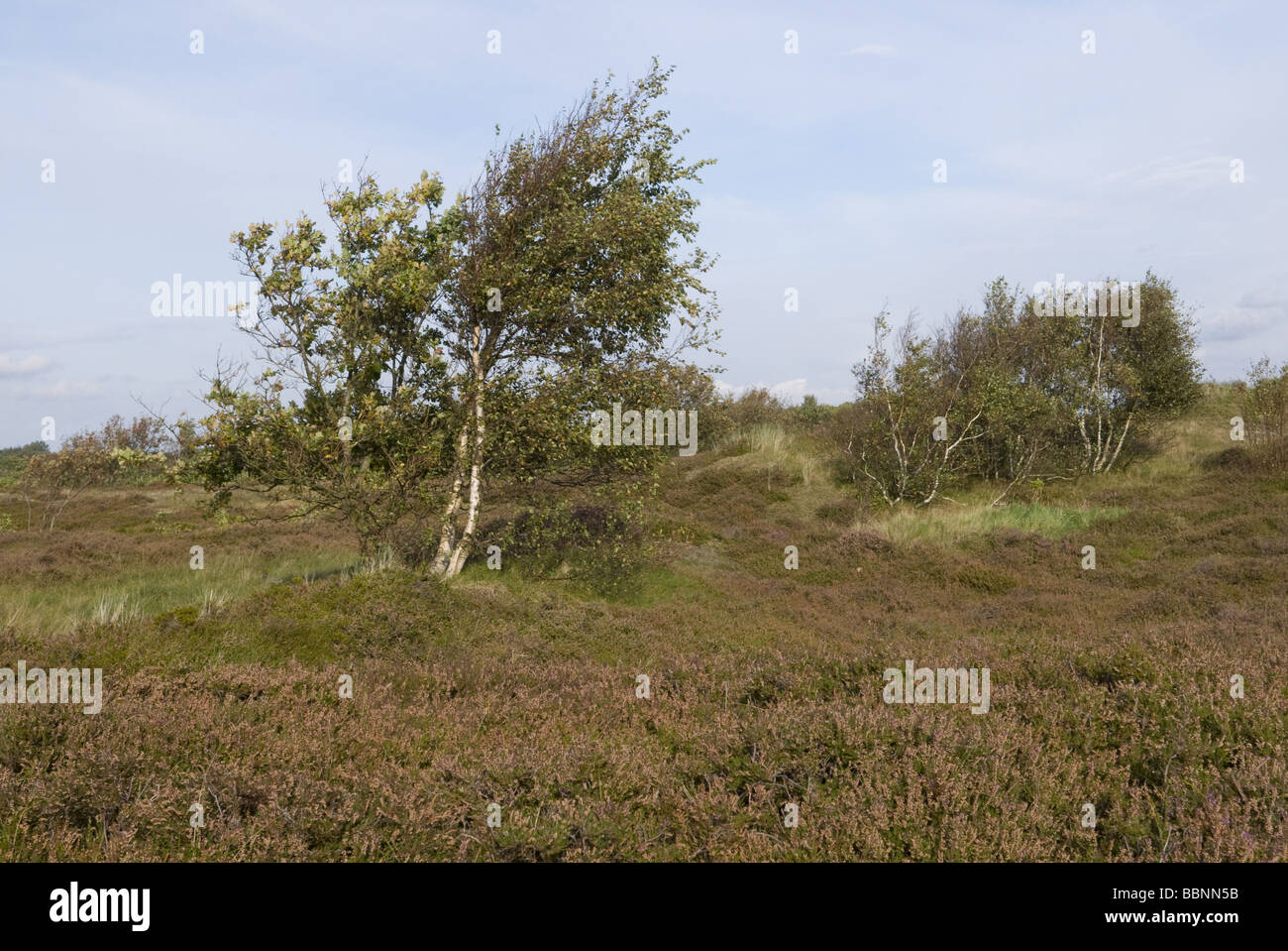 geography / travel, Germany, Lower Saxony, Cuxhaven, Nationalpark Niedersächsisches Wattenmeer, Duhner Heide, - Stock Image