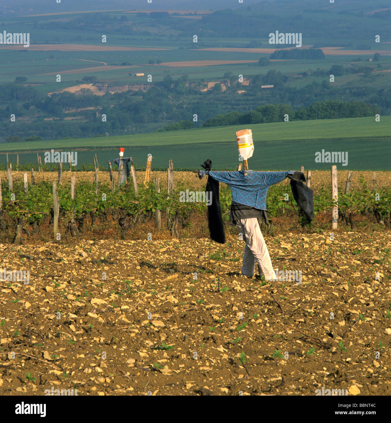 Scarecrow in the middle of a field - Stock Image