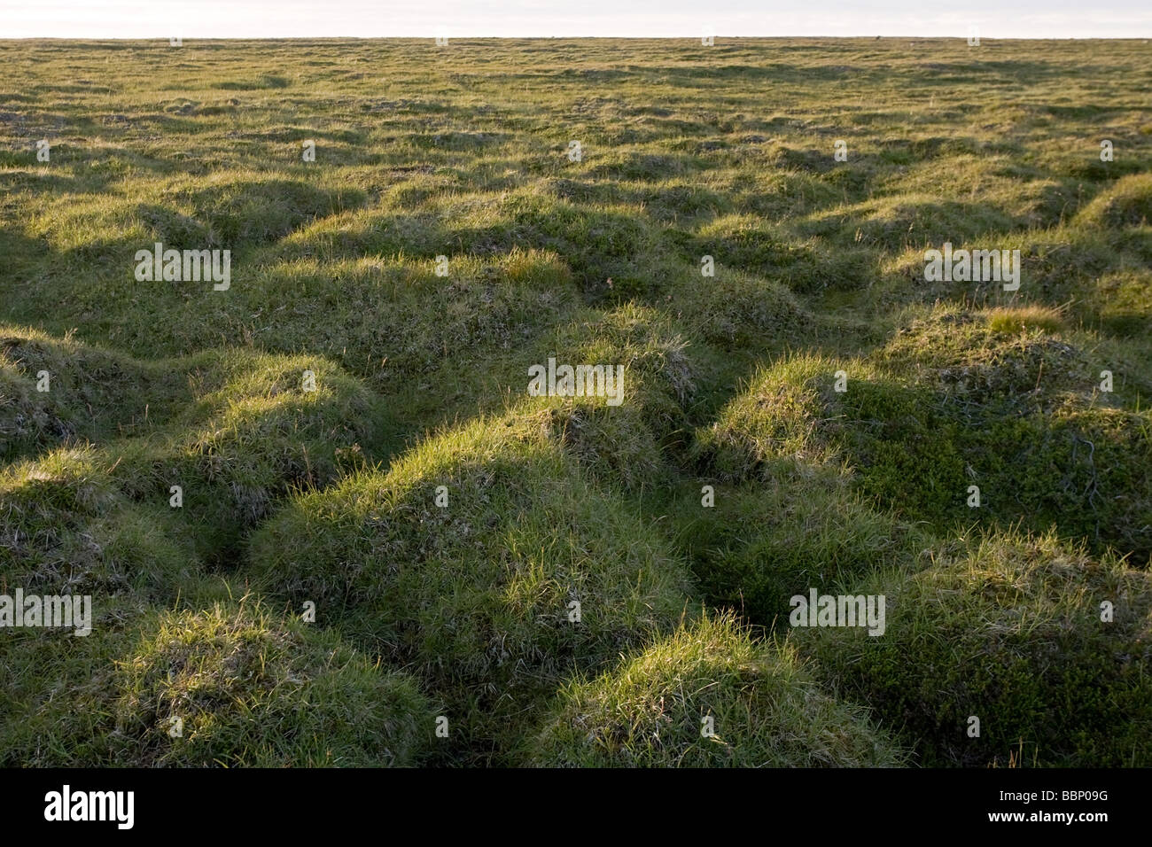 Landscape Hilly green grass with earth gleams - Stock Image