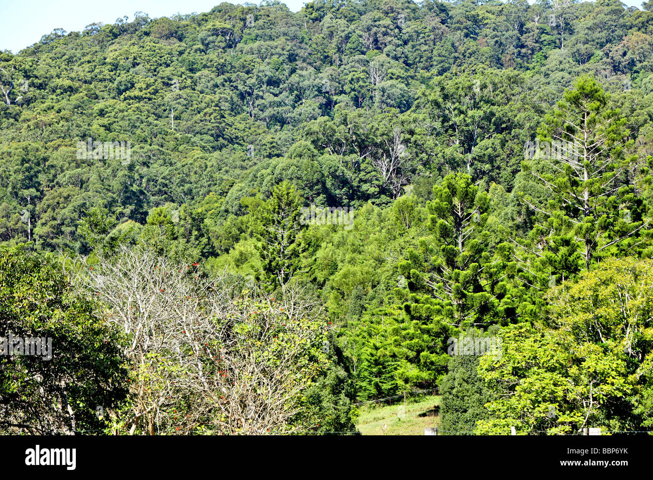 Australian bushland in winter - Stock Image