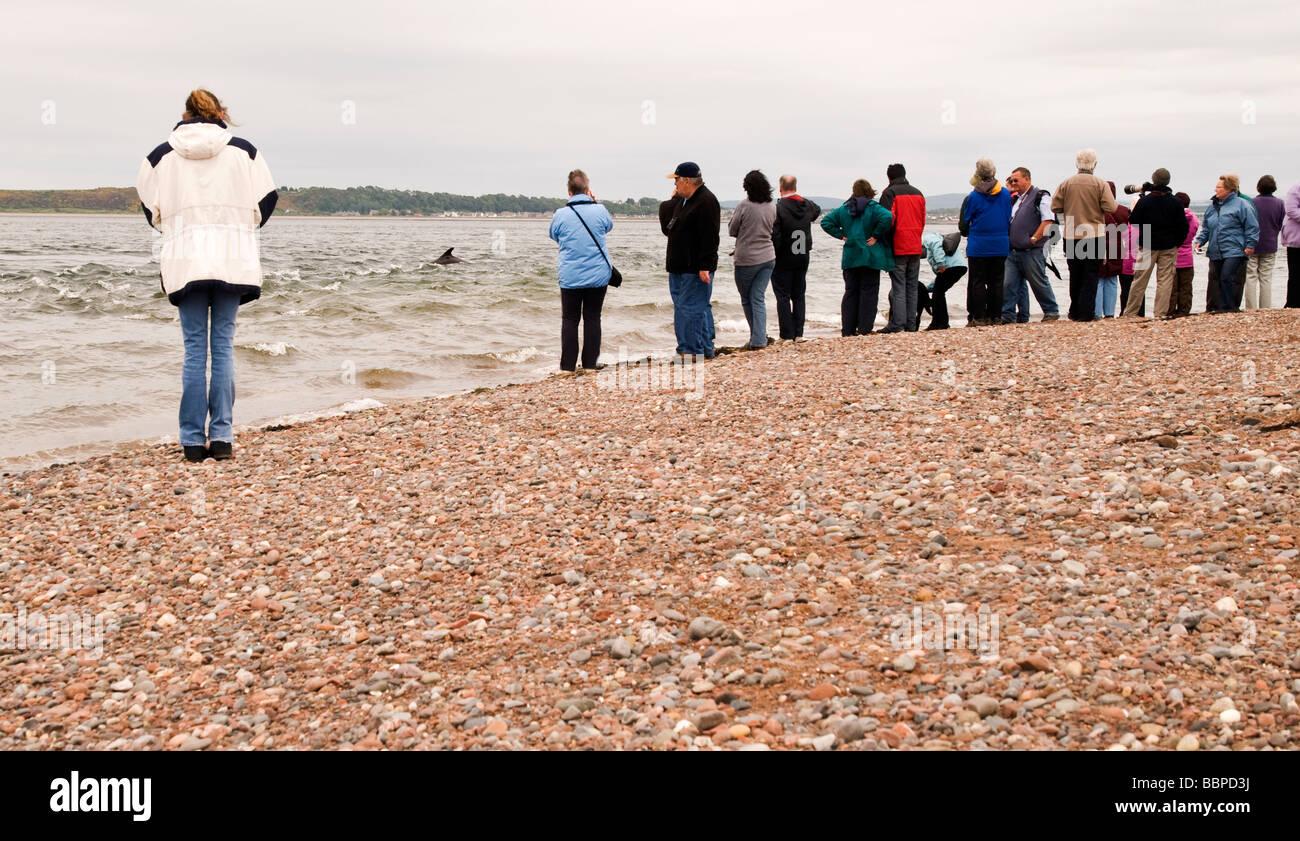 bottlenose dolphin watching on Black Isle, Scotland, UK - Stock Image