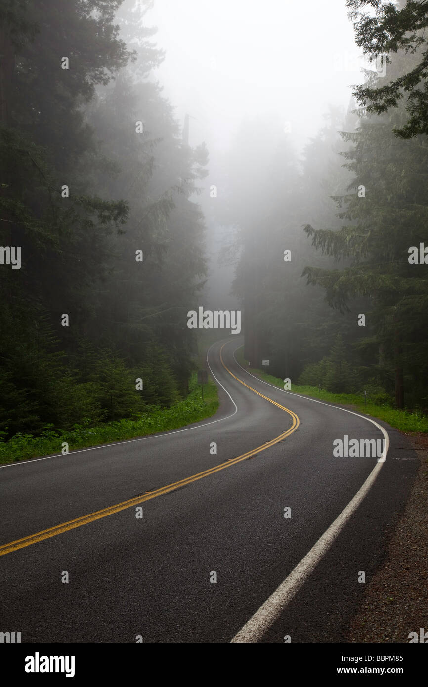 Fog obscures the roadway in Redwood National Park in California - Stock Image