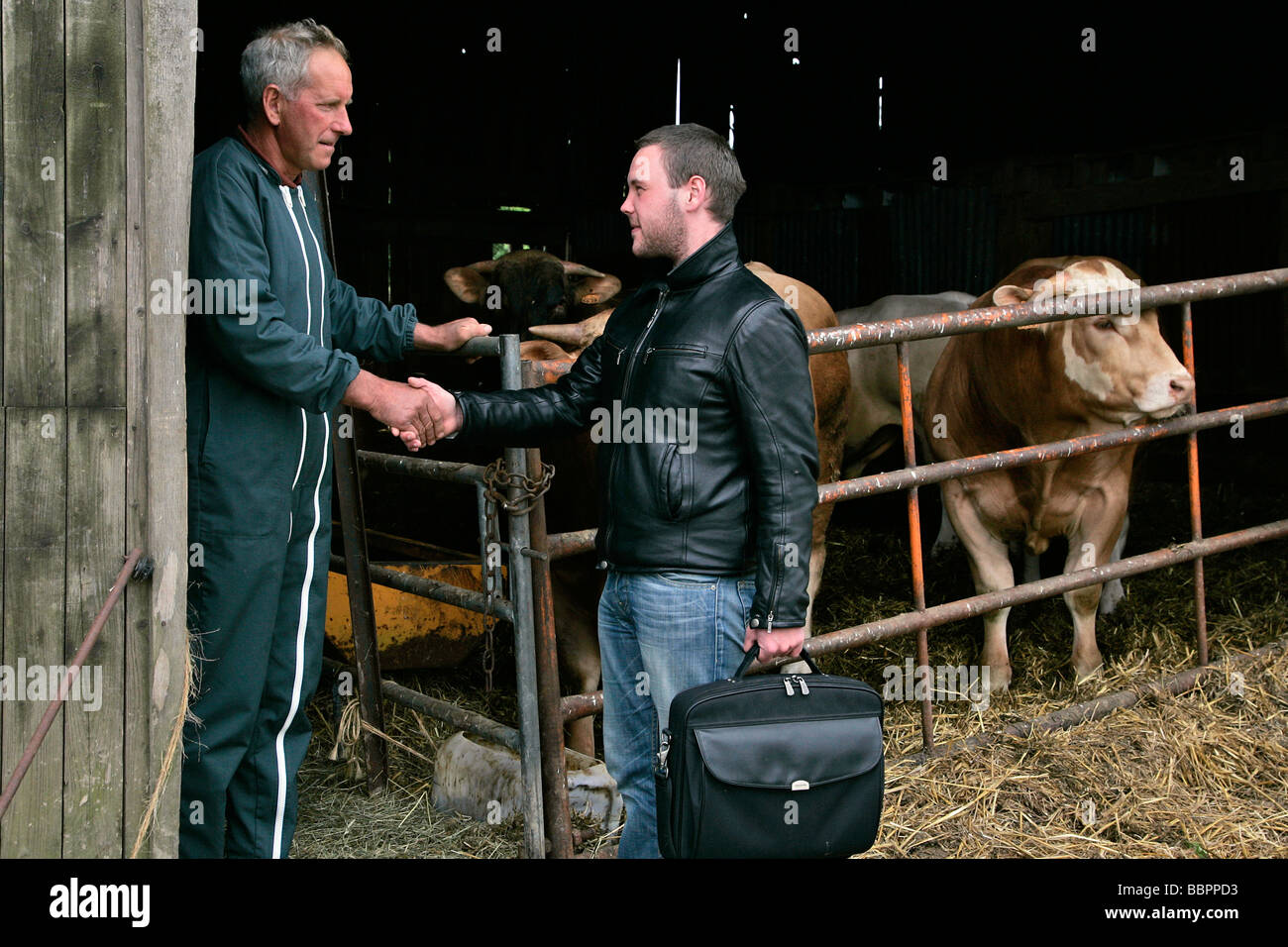 INSURANCE AGENT ON HIS CLIENT'S FARM, NORMANDY, FRANCE - Stock Image