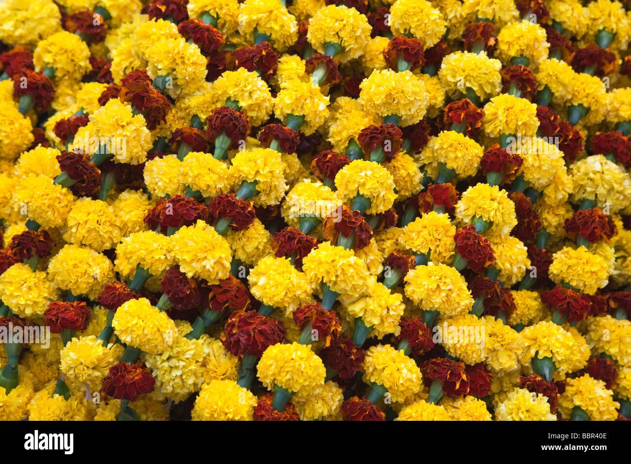 Yellow, orange and red carnations at Kolkata Flower Market, Kolkata, India - Stock Image