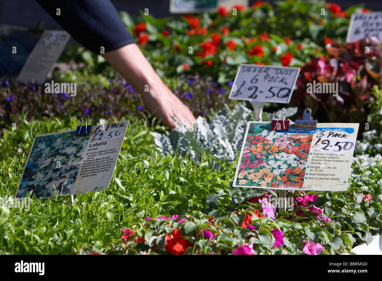 Garden Flowers For Sale At An Outdoor Market In The Uk With Names And  Prices Mans Hand In The Background