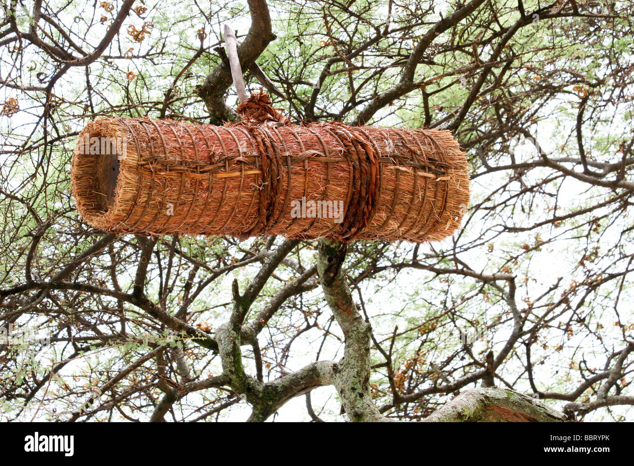 Africa Ethiopia Straw Beehives on an Acacia tree - Stock Image