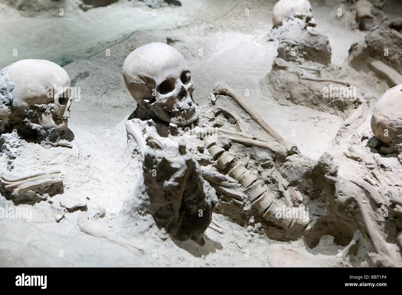 victim human skeleton Herculano Vesubio Naples Italy museum recreation atracttion representation disaster dead volcano - Stock Image