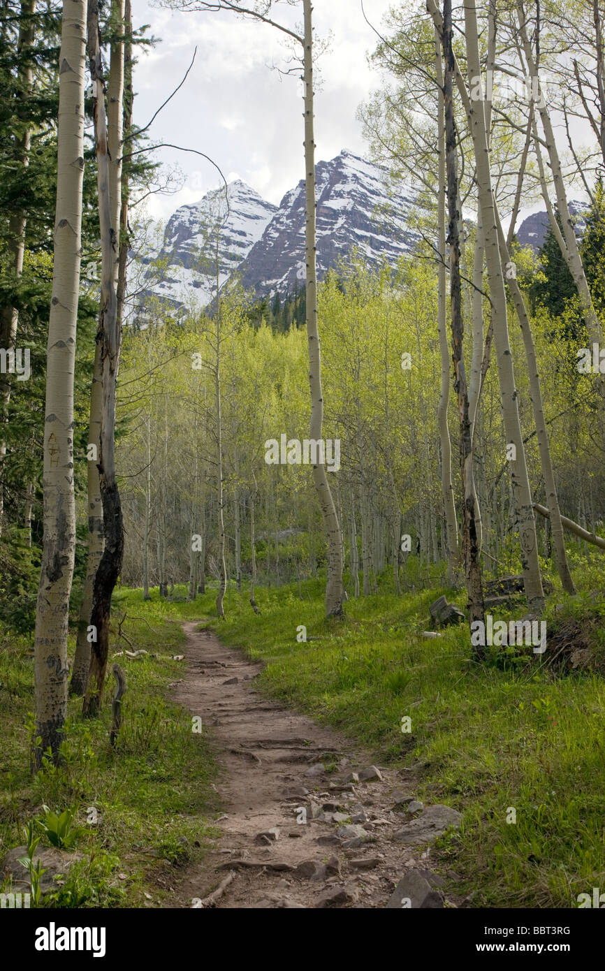 Hiking trail through the aspen forest Maroon Peaks, Maroon