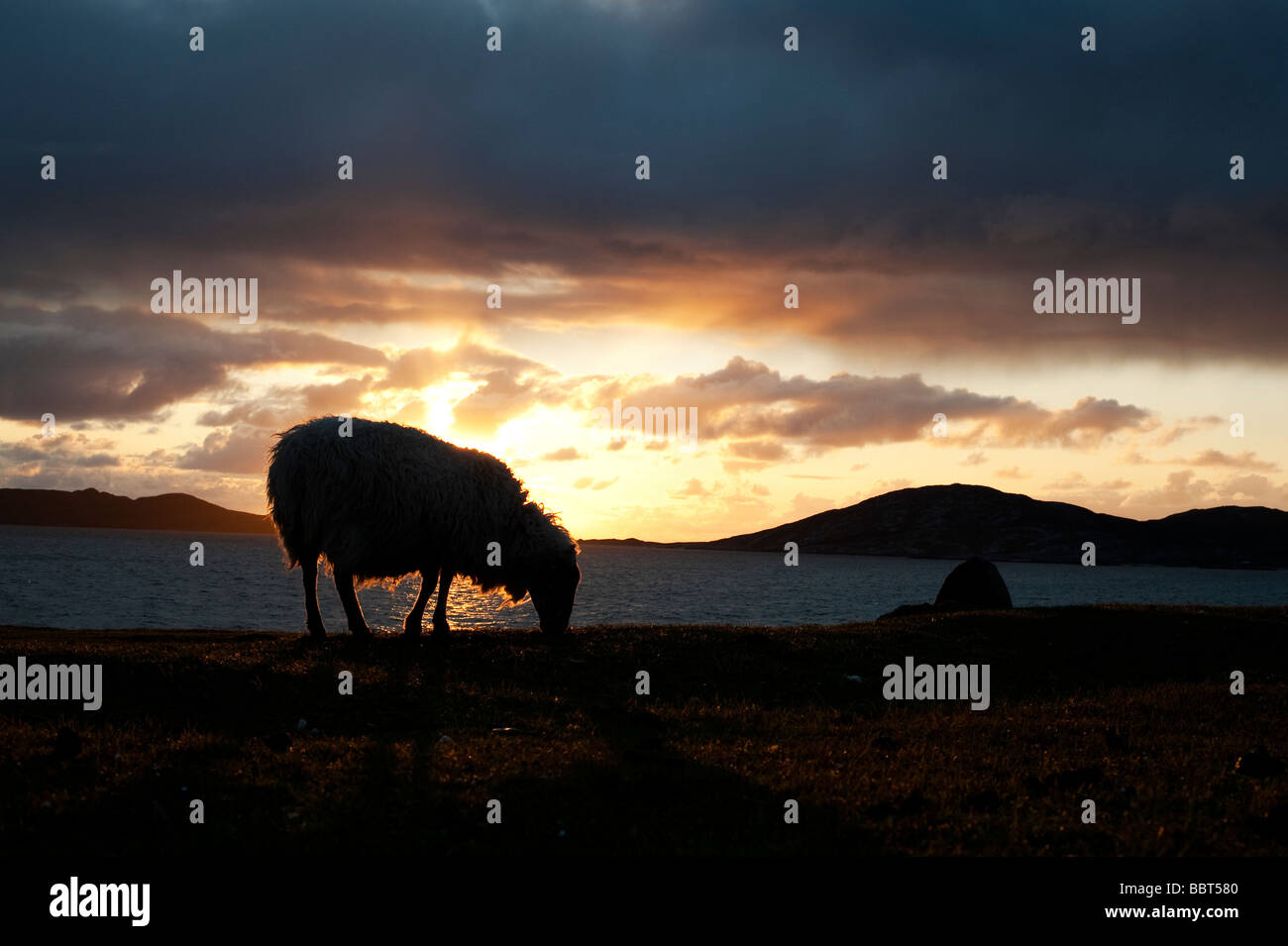 Sheep grazing silhouette against a sunset over Sound of Taransay , Isle of Harris, Outer Hebrides, Scotland - Stock Image