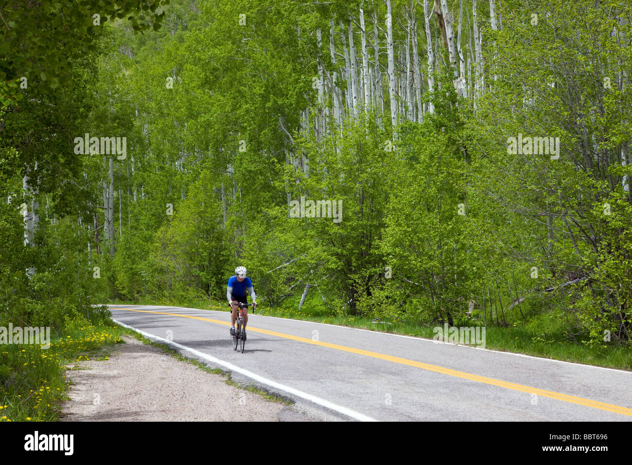 Bicyclist in summer on Independence Pass Road Collegiate Peaks region Pitkin County Colorado USA - Stock Image