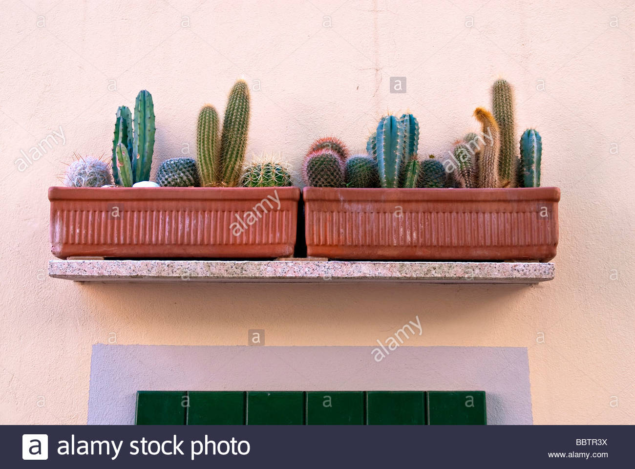 succulent plant - Stock Image