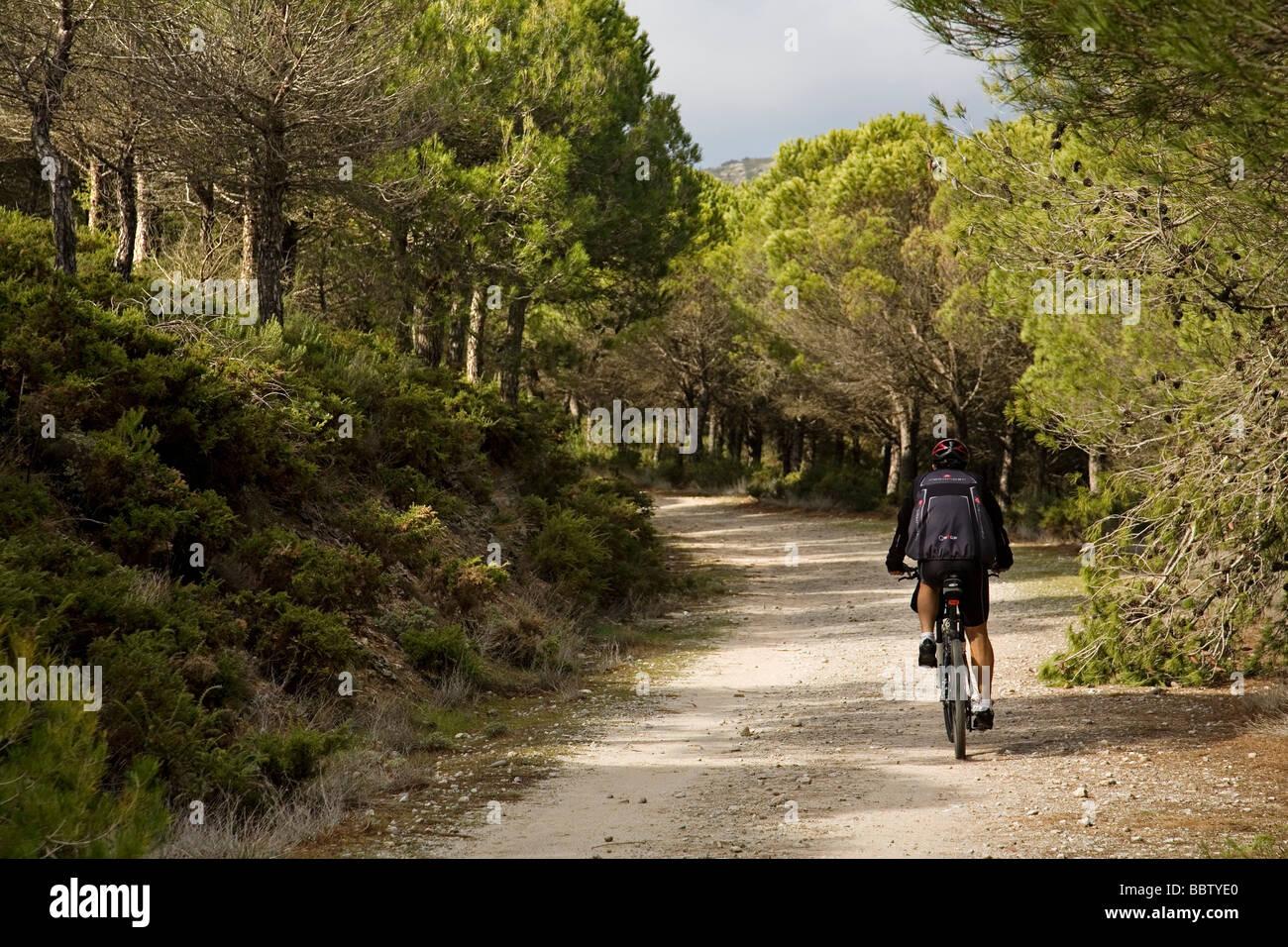 Ciclista Bosque Mediterraneo Pinos Sierra de Mijas Málaga Andalucía España Cycling Mediterranean - Stock Image