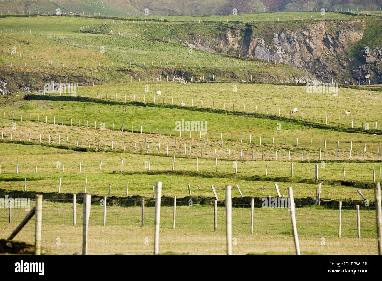 Fences. A series of wooden fence posts divide up the pasturelands and keep the sheep off the cliffs. - Stock Image