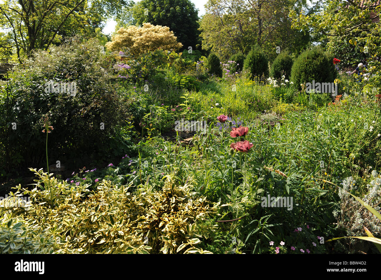 English Garden at East Lambrook Manor Gardens, South Petherton, Somerset designed by Margery Fish - Stock Image