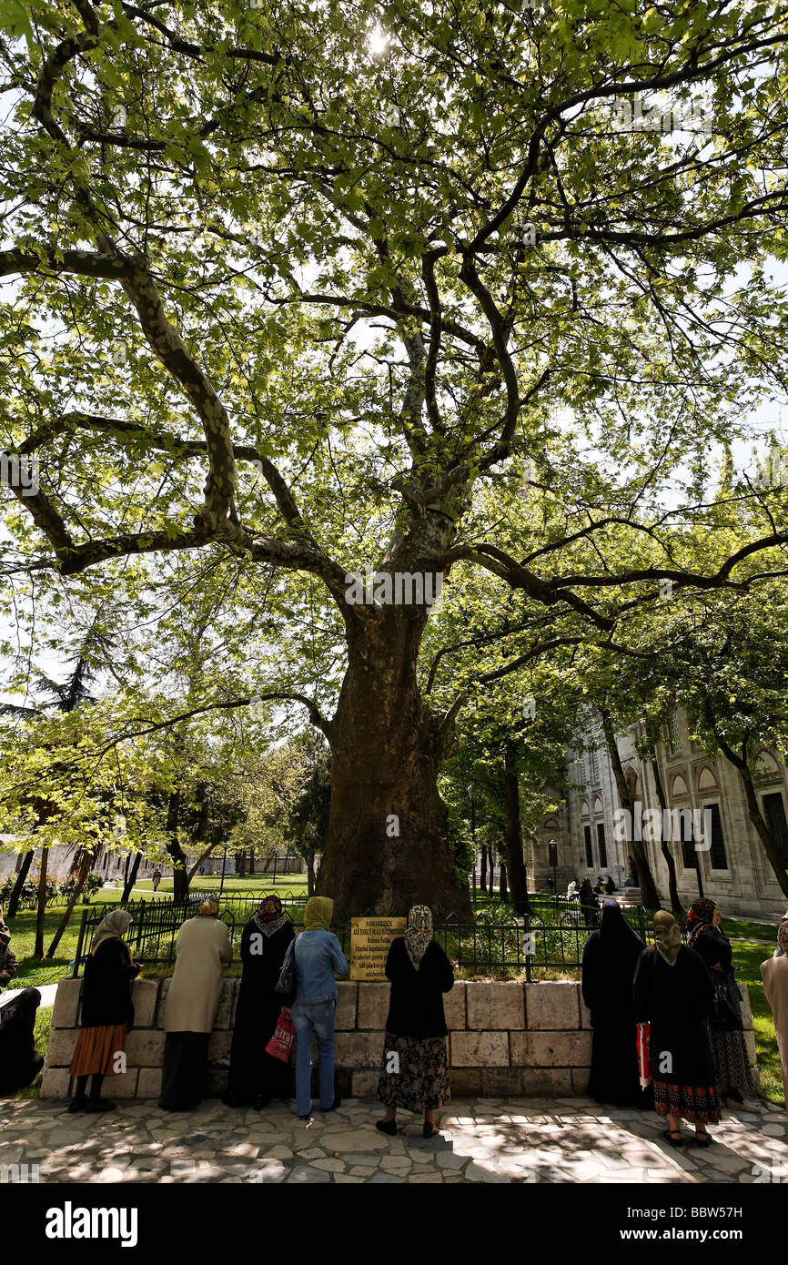 Women, Muslima, praying at a tomb under a mighty tree, Prince mosque Sehzade Camii, Istanbul, Turkey - Stock Image