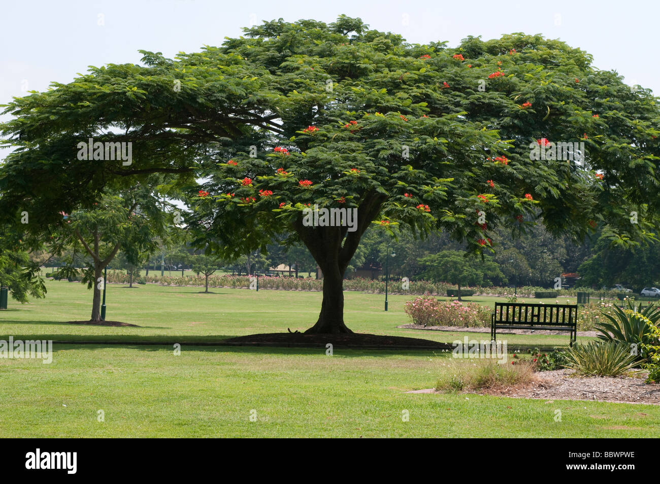 New Farm Park Brisbane Queensland Australia - Stock Image