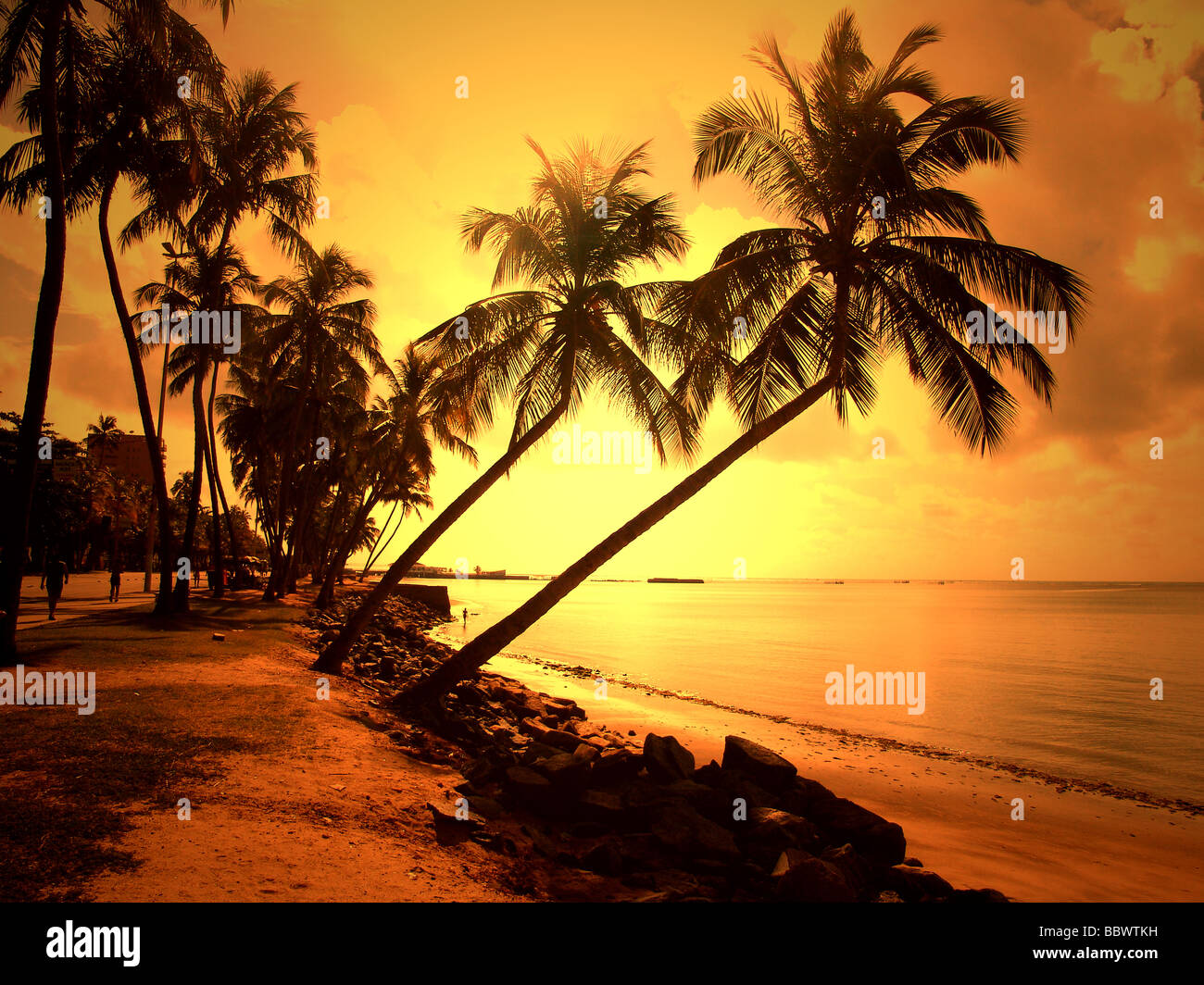 sunset light falling at alagoas beach paradise view brazil Stock Photo