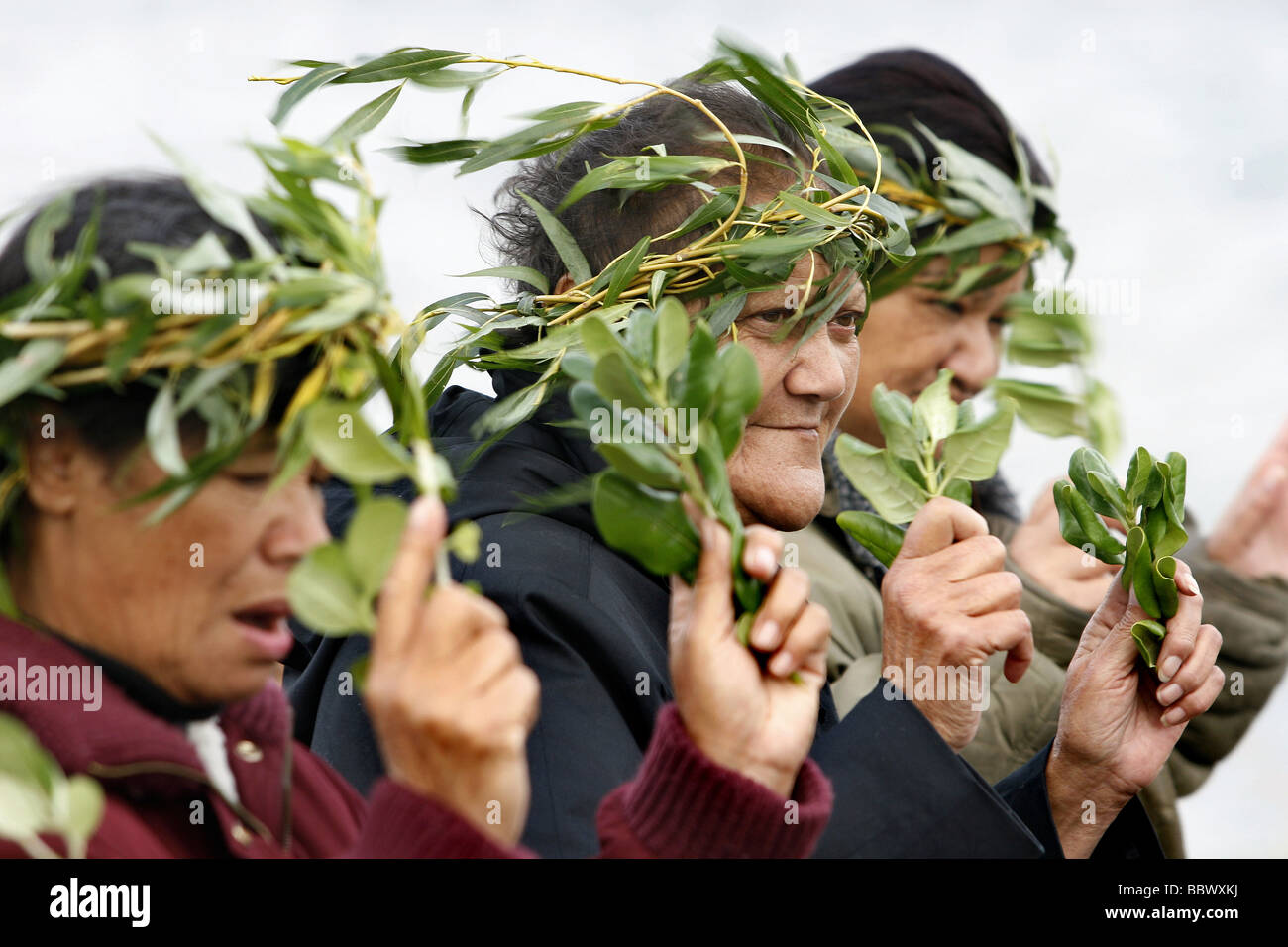 Repatriation of ancient Maori bones, thought to be of the original Polynesian settlers to New Zealand, Wairau Bar, - Stock Image
