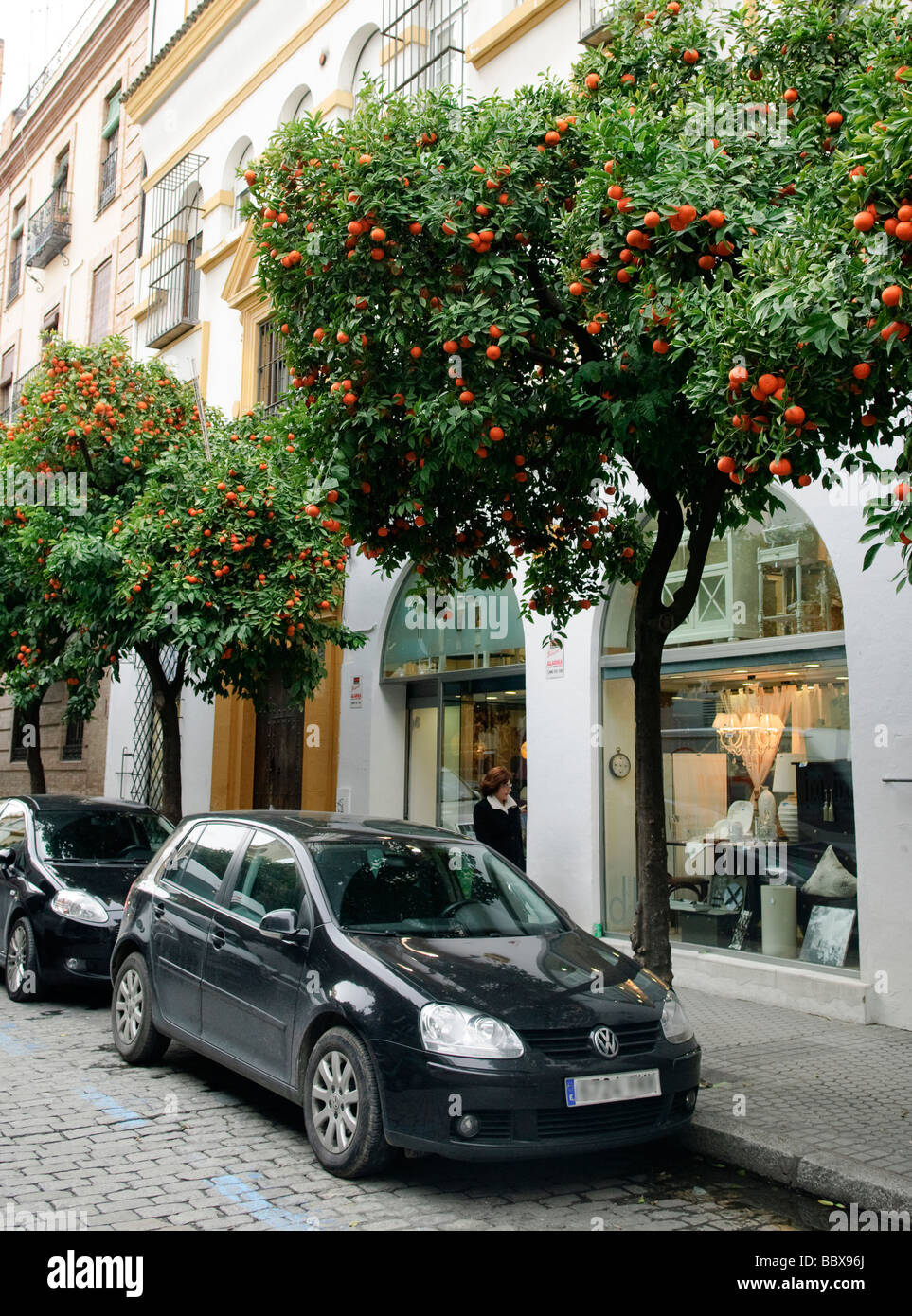 downtown shopping street lined by tangerine trees in Sevilla , Spain - Stock Image