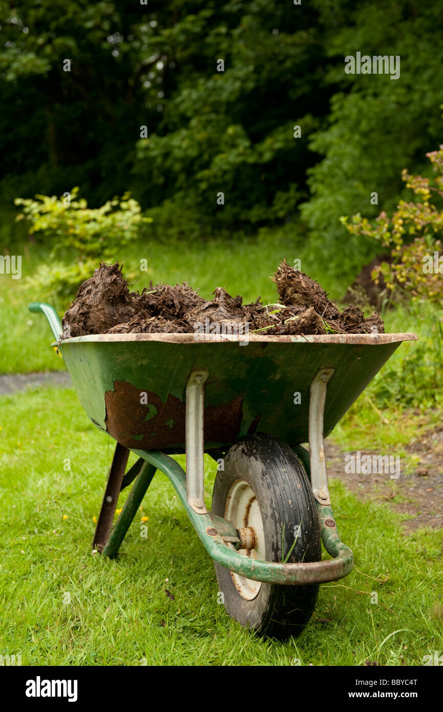a wheelbarrow full of well rotted manure in a garden - Stock Image