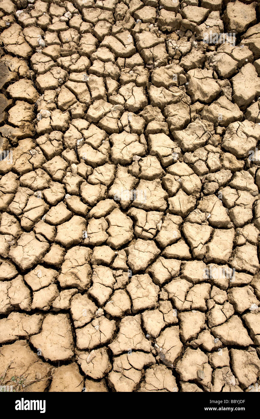 Parched mud - Stock Image