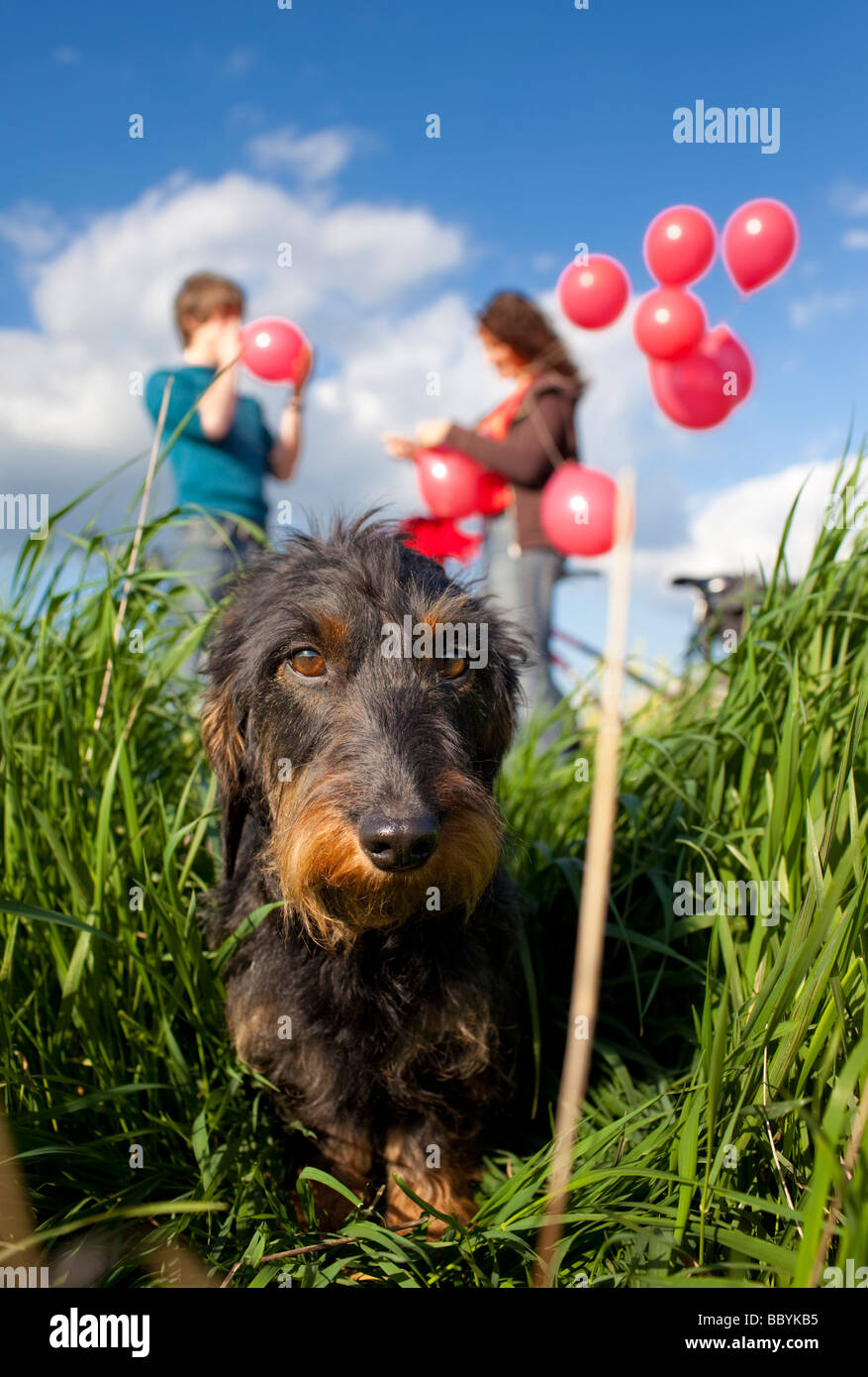Young couple with dog and balloons - Stock Image