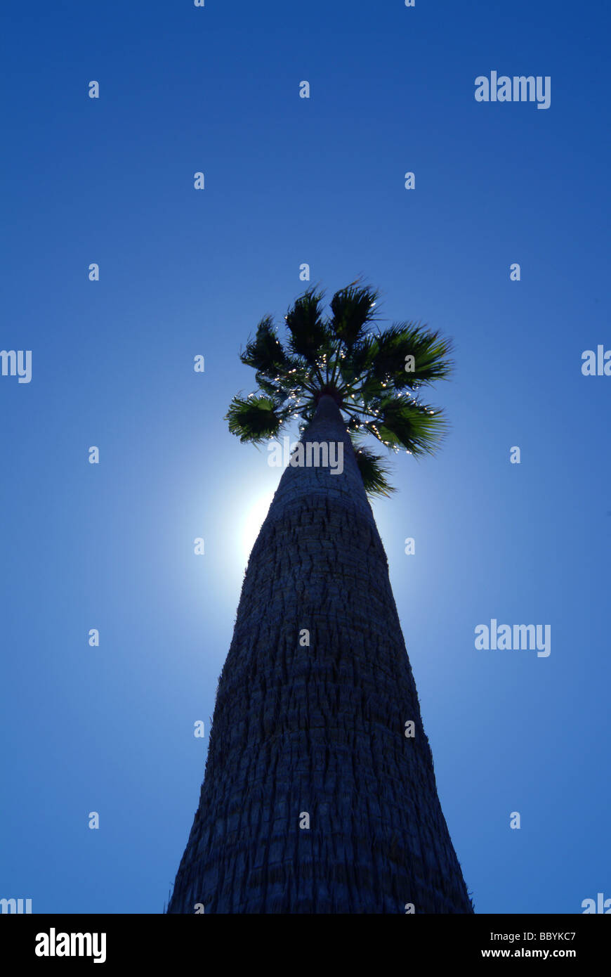 Tropical palm tree against the sun - Stock Image